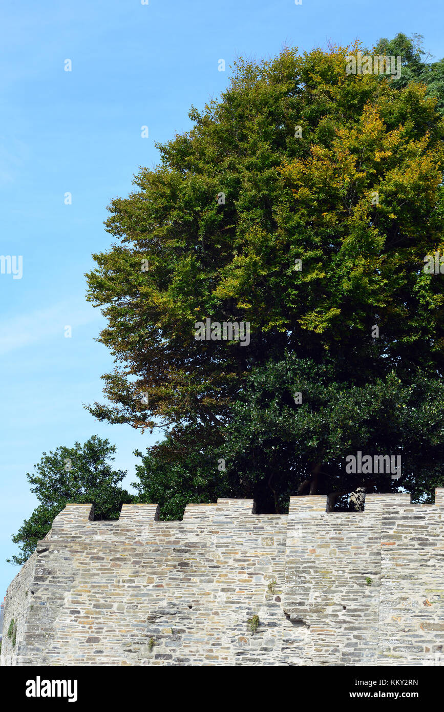 Trees above the walls of Cardigan castle Stock Photo
