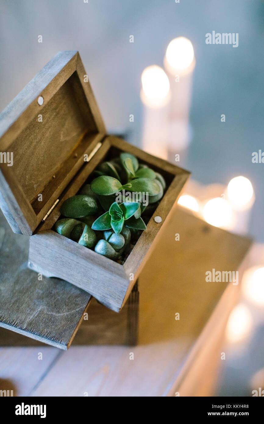 planting, growing, crafting concept. on the blured background of lights there is box made of dark wood with green - Stock Image