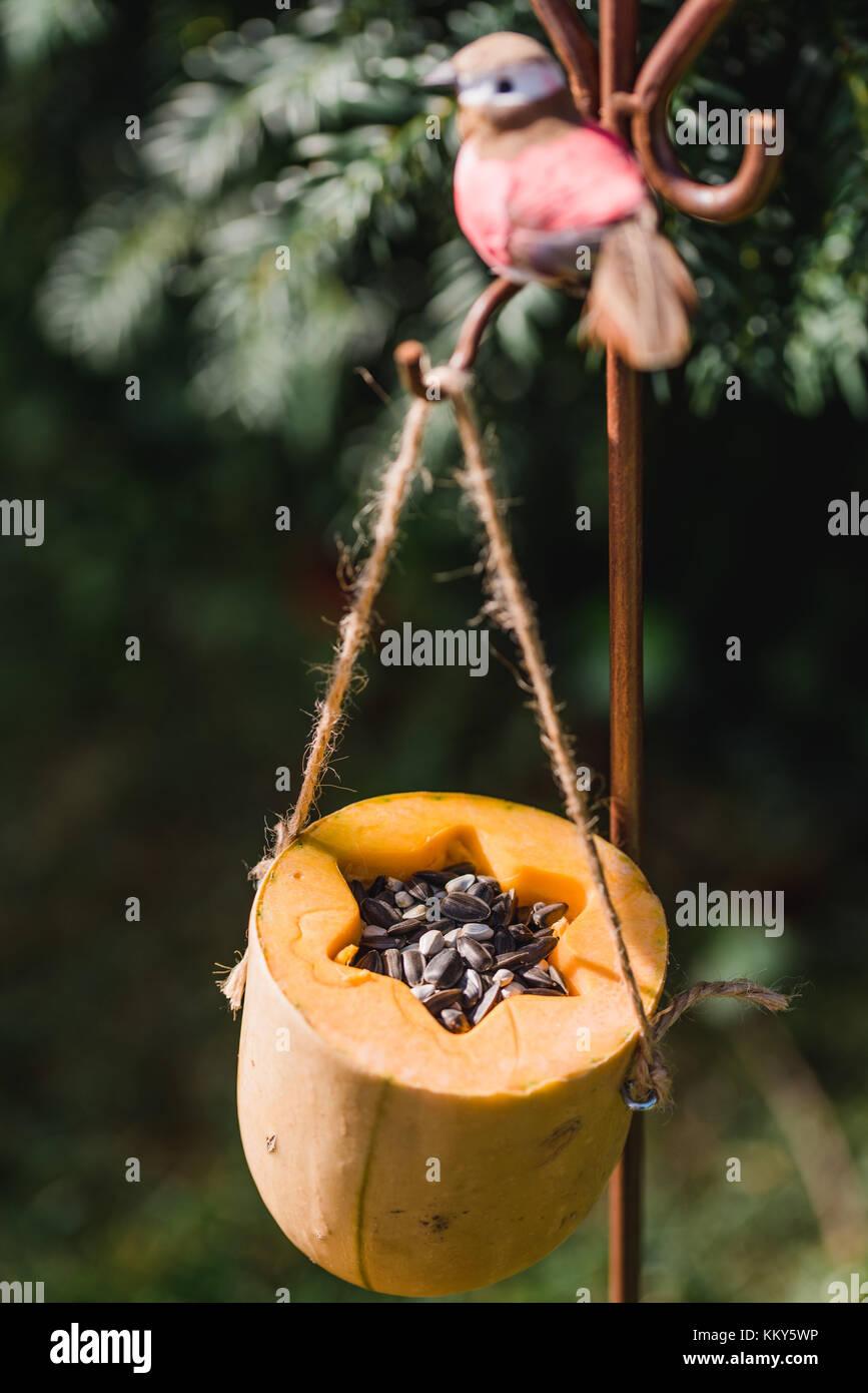 DIY, bird feeder, pumpkin, hang, - Stock Image