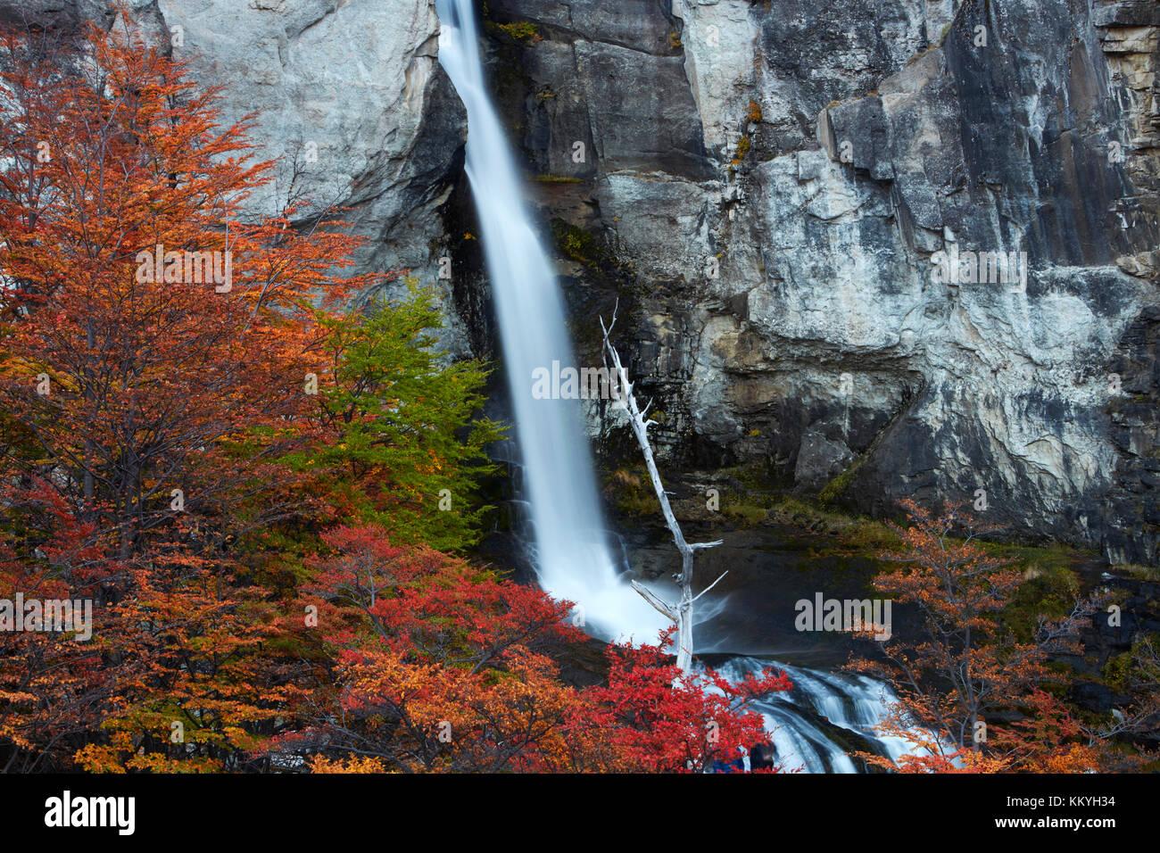El Chorrillo Waterfall and lenga trees in autumn, near El Chalten, Parque Nacional Los Glaciares, Patagonia, Argentina, - Stock Image