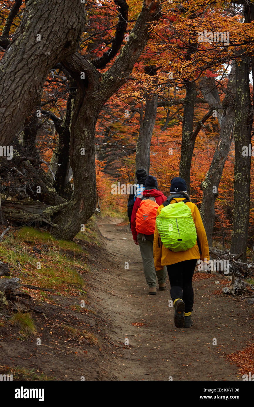 Hikers in lenga forest on track to Laguna de los Tres, Parque Nacional Los Glaciares (World Heritage Area), Patagonia, - Stock Image