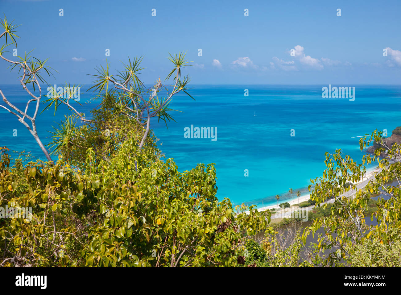 Darkwood Beach with palm trees seen from an observation point in Antigua. Stock Photo