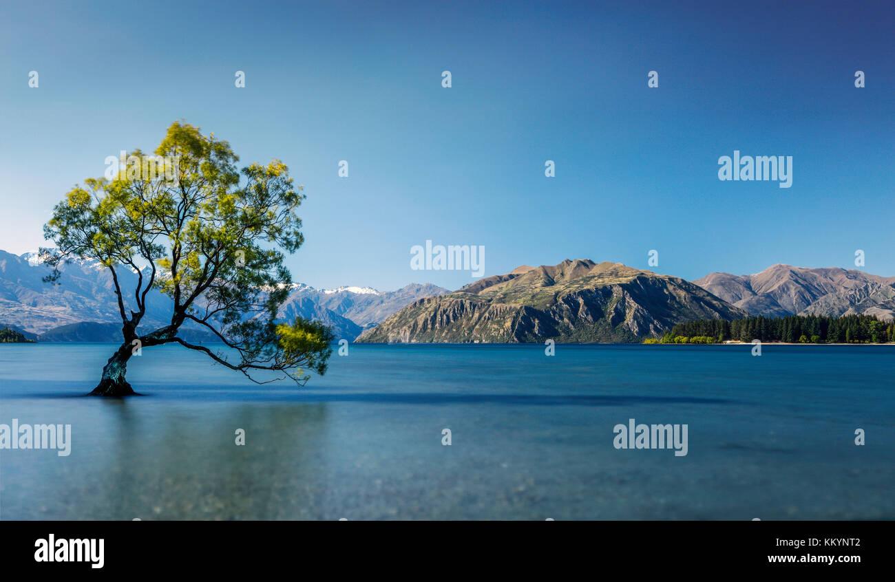 The famous tree of Wanaka Lake in Otago Region, New Zealand. Stock Photo