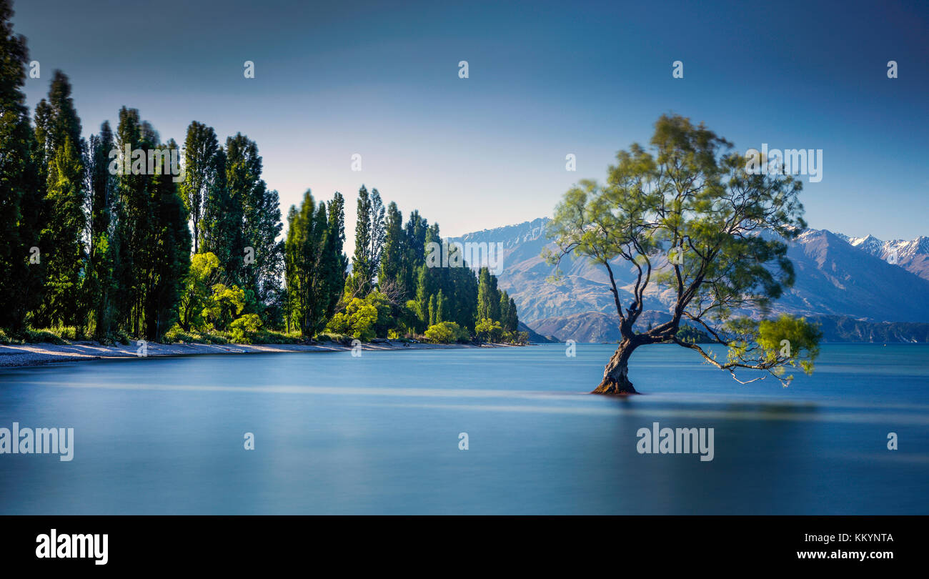 The famous Wanaka Tree at Lake Wanaka, Otago, New Zealand. - Stock Image