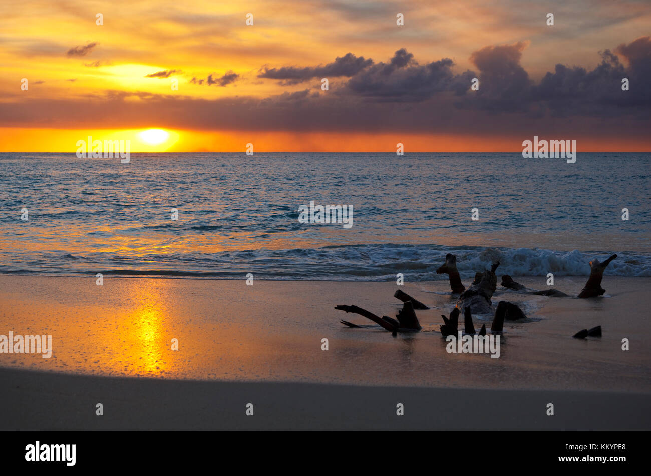 Driftwood at the beach in Antigua at sunset. The ash clouds in front of the sun are from the Soufriere Hills Volcano - Stock Image