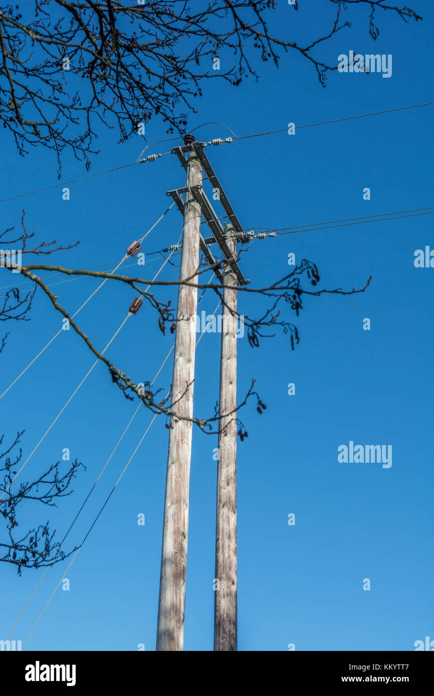 Rural electricity distribution poles surrounded by trees (which could bring down electrical wires in high wind causing - Stock Image