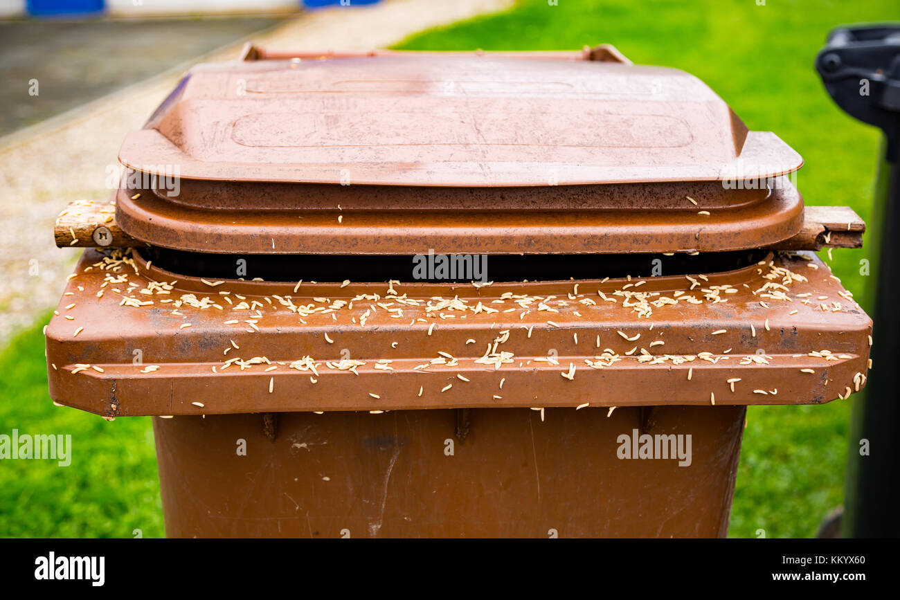 A lot of maggots on a brown trash can - Stock Image