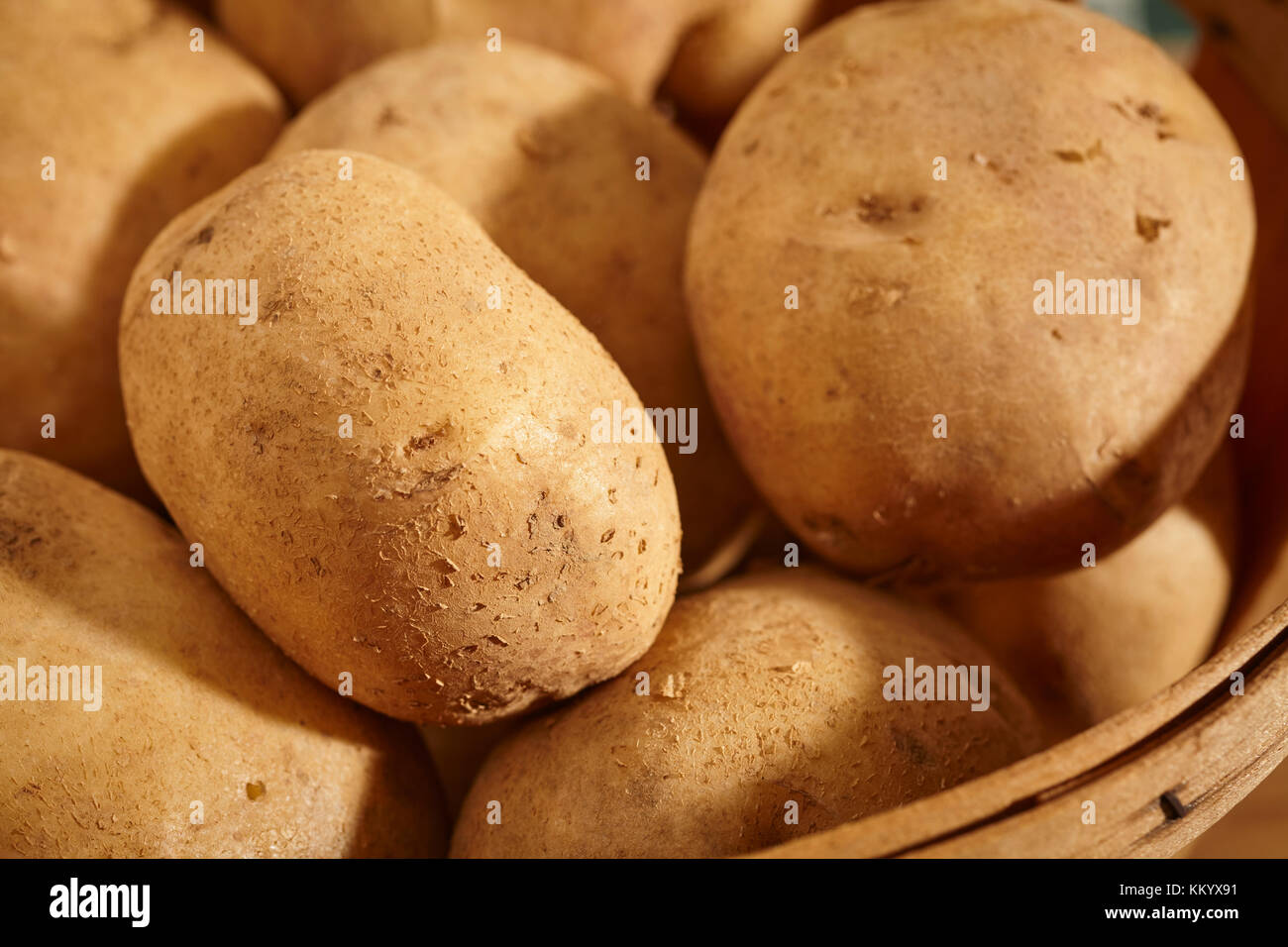 whole, fresh, raw white potatoes from Lancaster County, Pennsylvania, USA - Stock Image