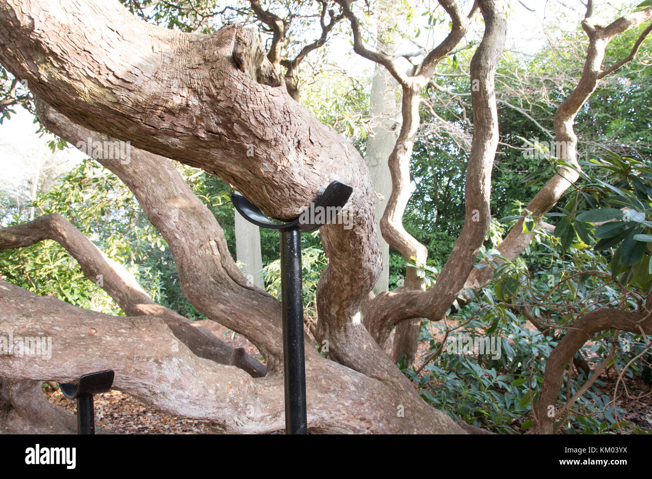 tree supports stock photos tree supports stock images alamy