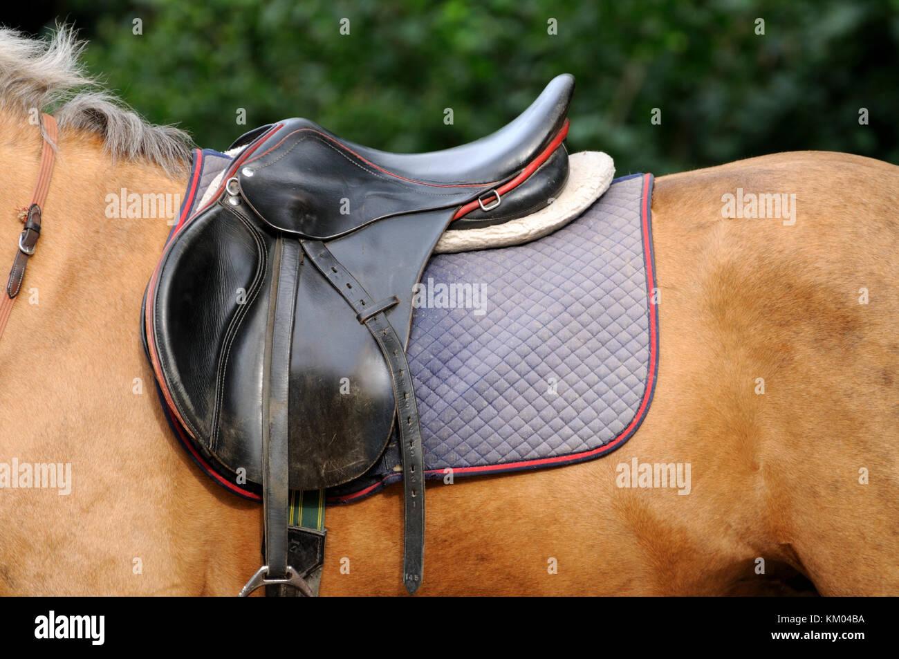 Leather saddle horse close up. Stock Photo