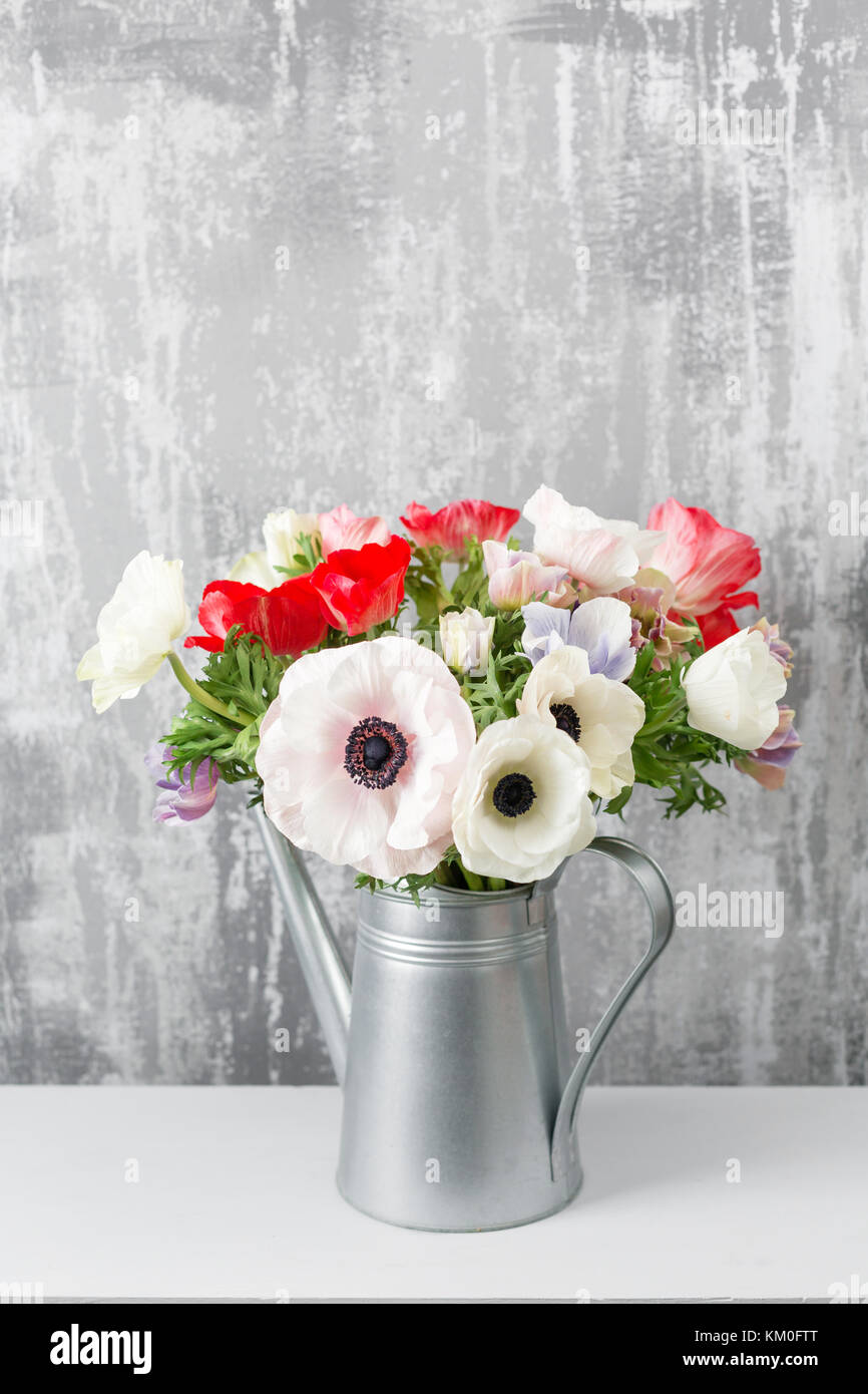 Winter flowers. Anemones in a vase watering can standing on a wooden table. On the background old gray wall art. - Stock Image