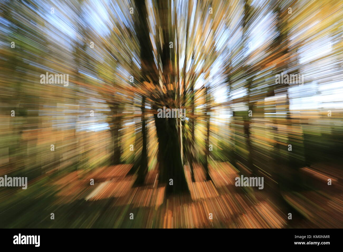 forest trees at speed in autumn time - Stock Image