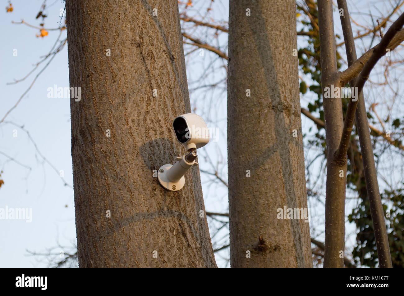 Tree Mounted Surveillance Camera - Stock Image
