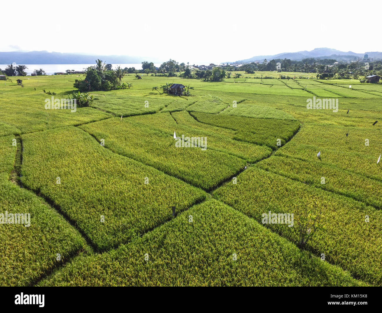 Rice field of Sulawesi in aerial drone point of view. - Stock Image