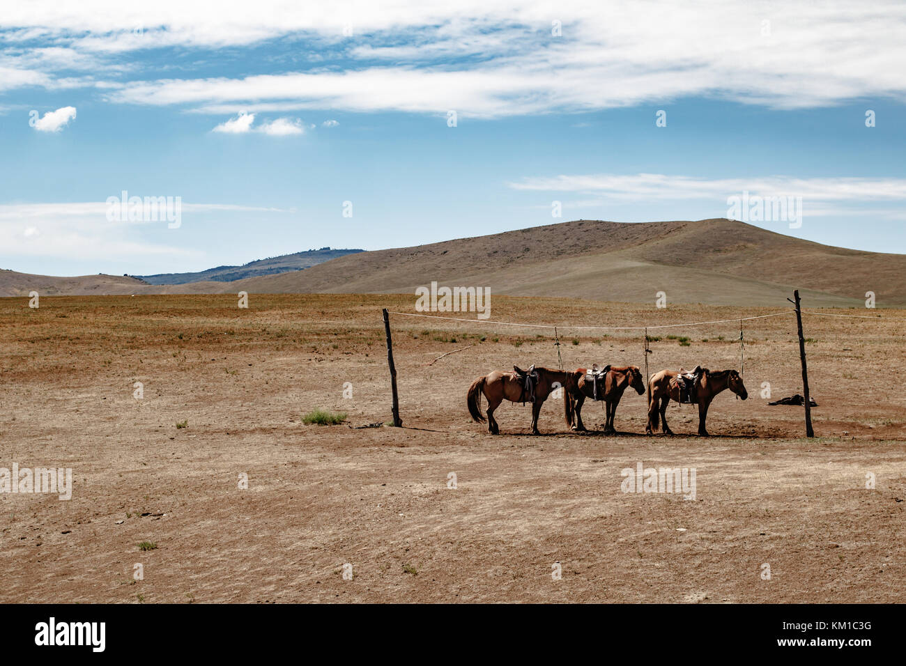 Horses in the national park of Hustai, Mongolia Stock Photo