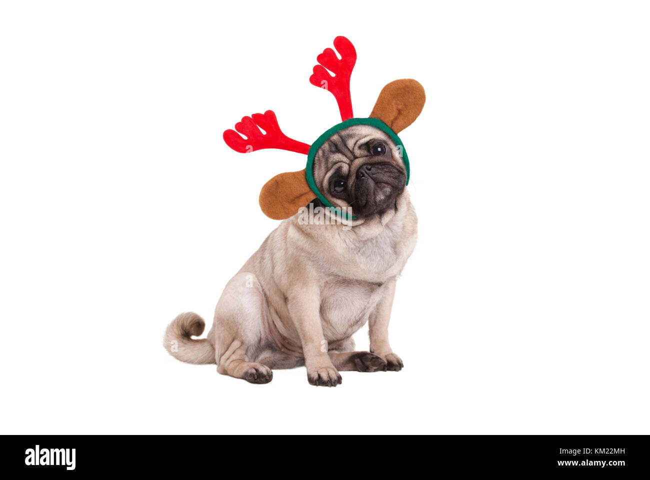 funny Christmas pug puppy dog sitting down, wearing reindeer antlers diadem, isolated on white background - Stock Image