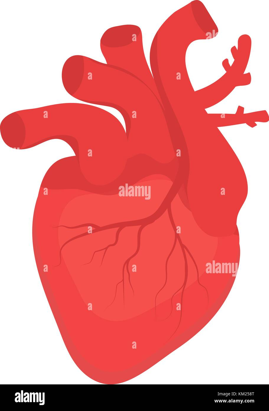 Human heart icon, flat style  Internal organs symbol