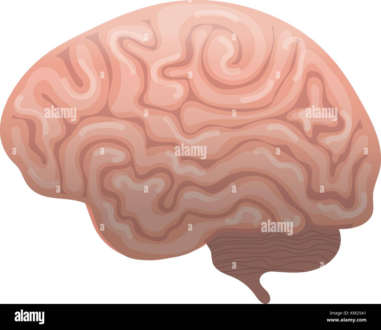 Human brain icon, flat style. Internal organs symbol the side view, isolated on white background. Vector illustration. - Stock Image