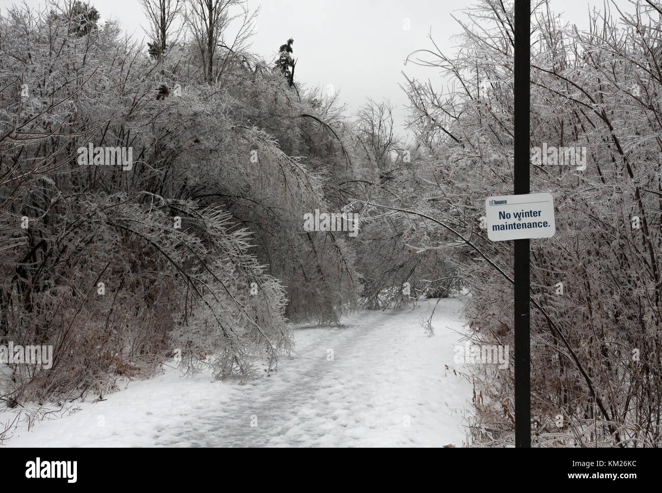 Damage caused by severe winter ice storm in Toronto, Ontario, Canada - Stock Image