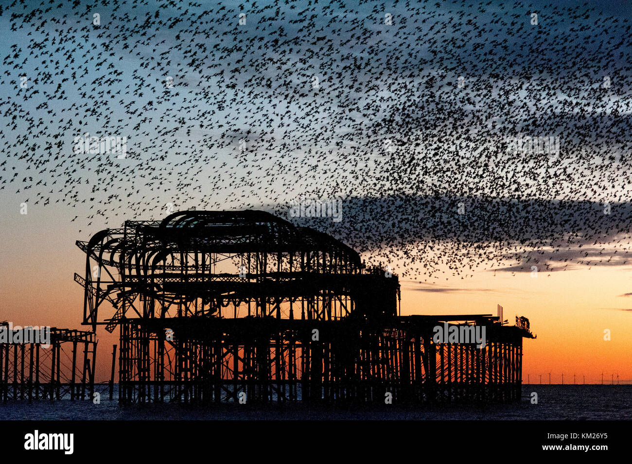Murmuration over the ruins of Brighton's West Pier on the south coast of England. A flock of starlings swoops in unified mass over the pier at sunset. Stock Photo