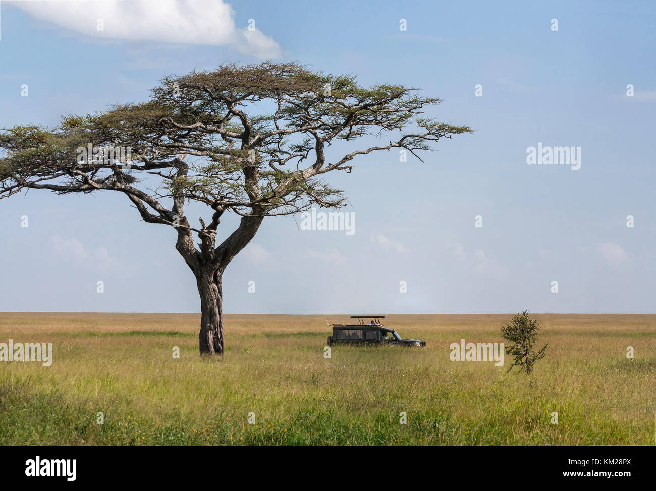 Safari jeep in the Serengeti, Tanzania, Africa - Stock Image