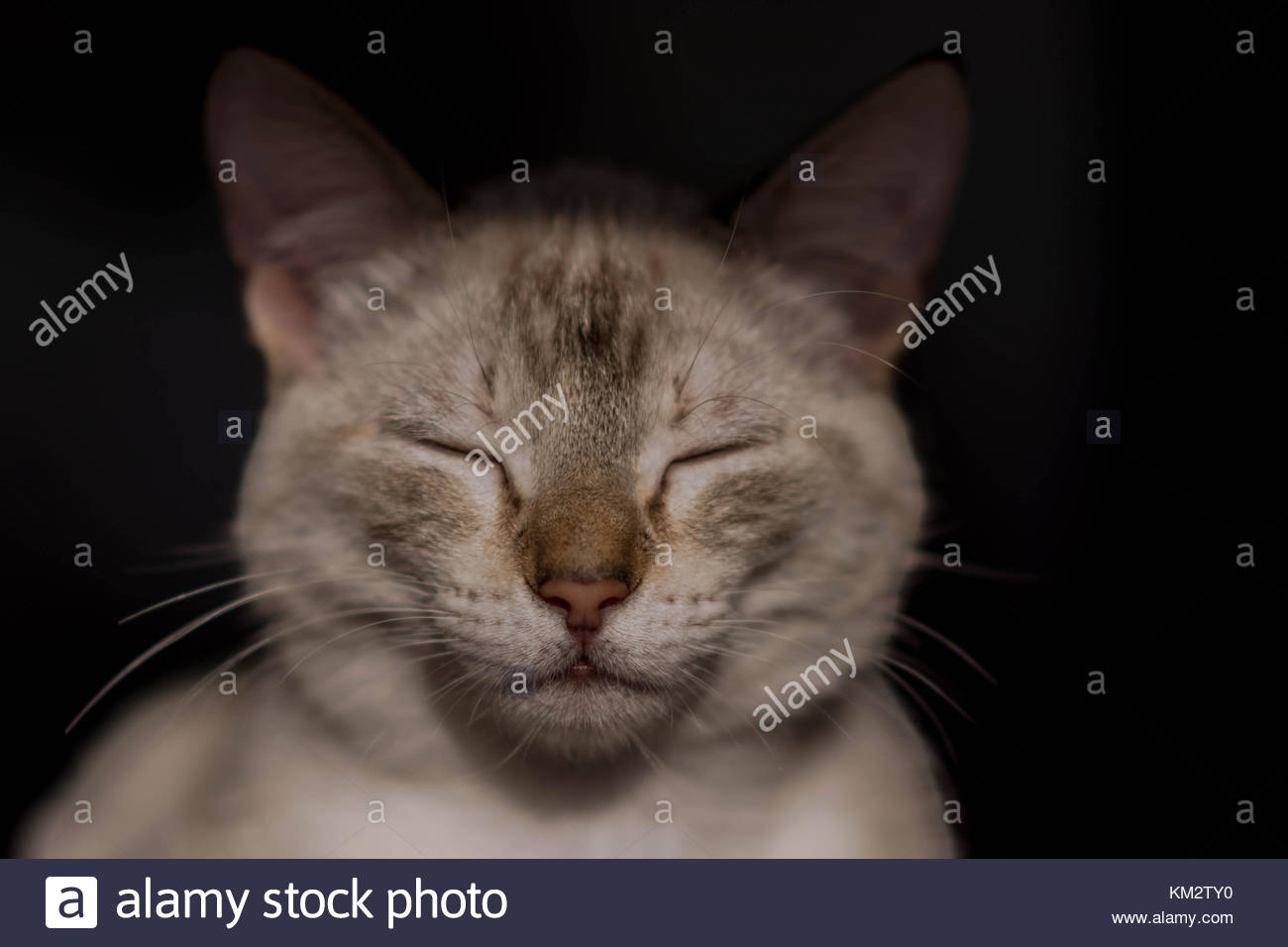 Common female cat resting while the sun light hits its face. - Stock Image