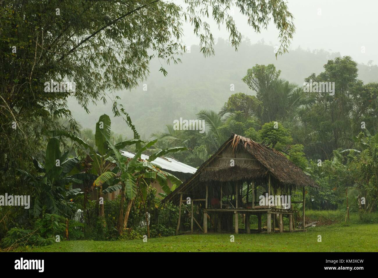 A village hut stays dry on long stilts during a tropical rainstorm in Papua New Guinea - Stock Image