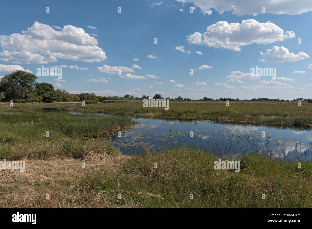 Linyanti river and marshes in Namibia, Africa - Stock Image