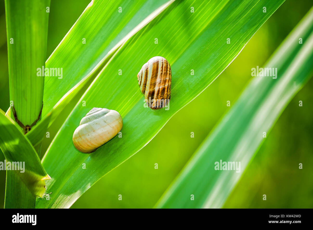 Slugs and lurking Spider on the left Hand side - Stock Image