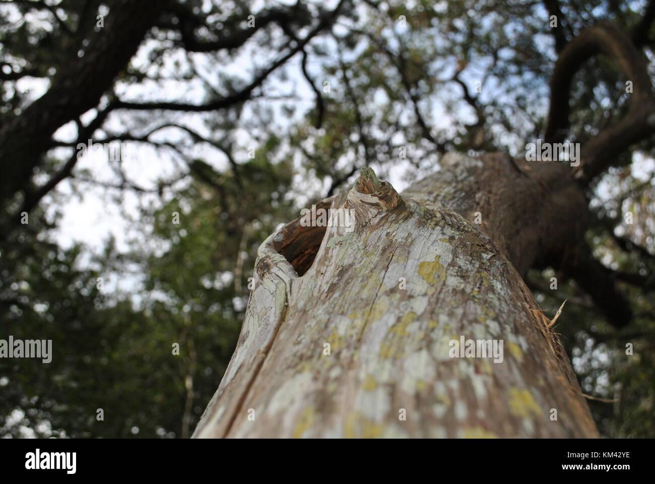 Deviant Tree - Stock Image
