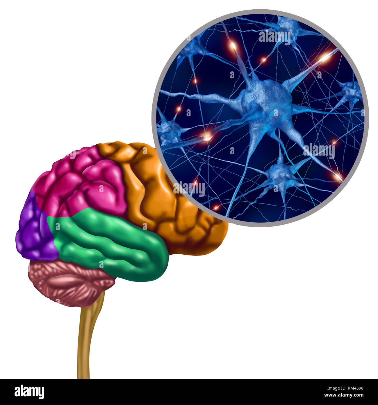 Brain lobe active neurons as a human thinking ogan with neuron magnification with 3D illustration elements. - Stock Image