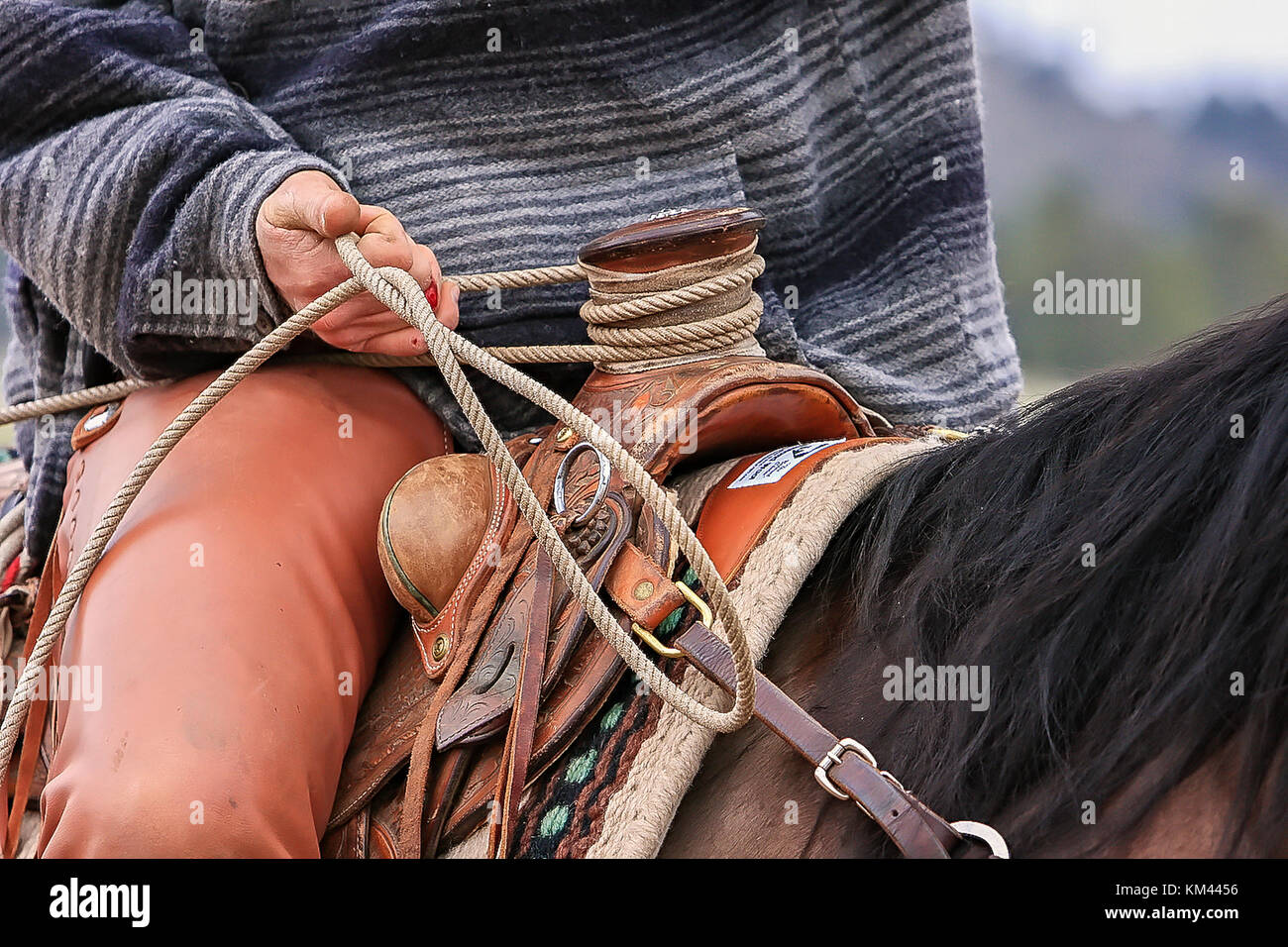 Hands Of A Working American Cowboy Roping Cattle - Stock Image