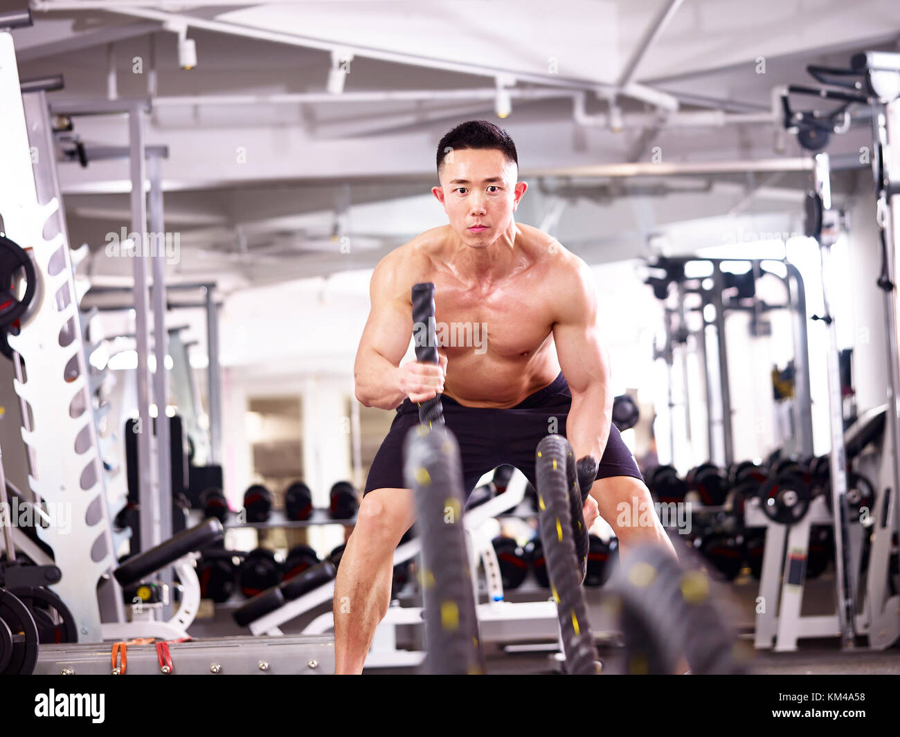 asian male bodybuilder working out in gym using battle ropes. - Stock Image