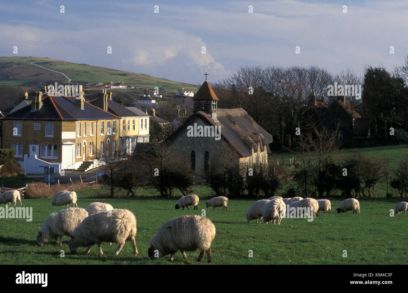 sheep grazing in front of St Agnes Church, Freshwater Bay, Isle of Wight, Hampshire, England - Stock Image
