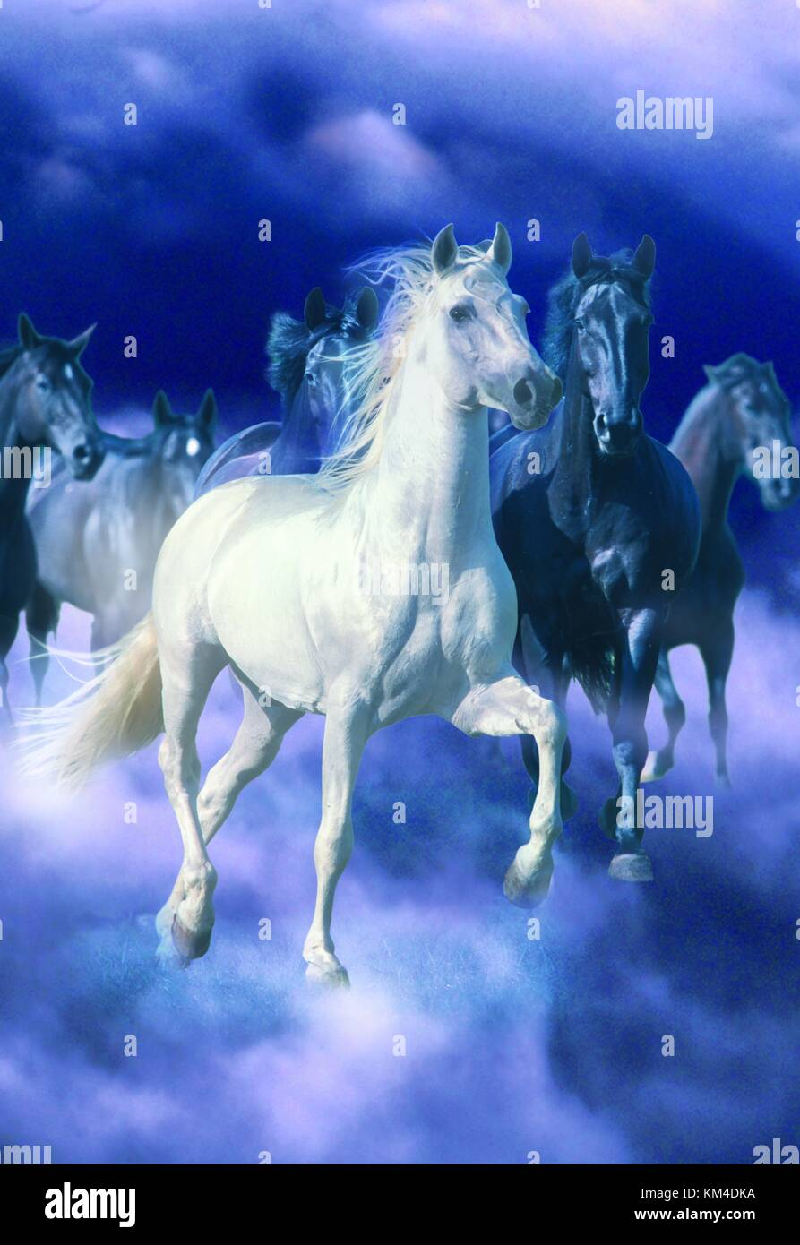 A White Horse And Four Black Horses Running Through Clouds Stock