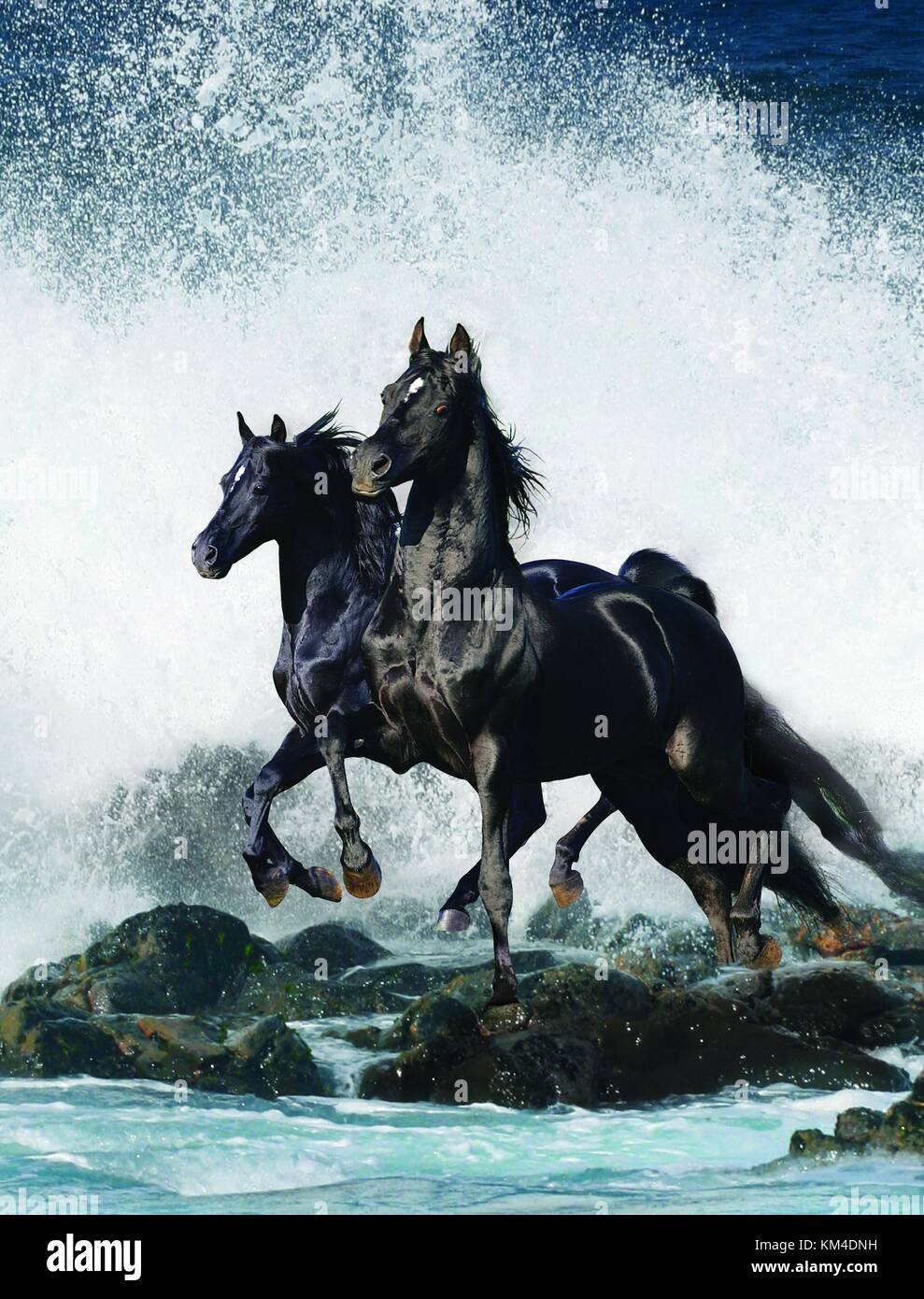 Two Black Horses Standing On Rocks With Sea Spray All Around Stock Photo Alamy