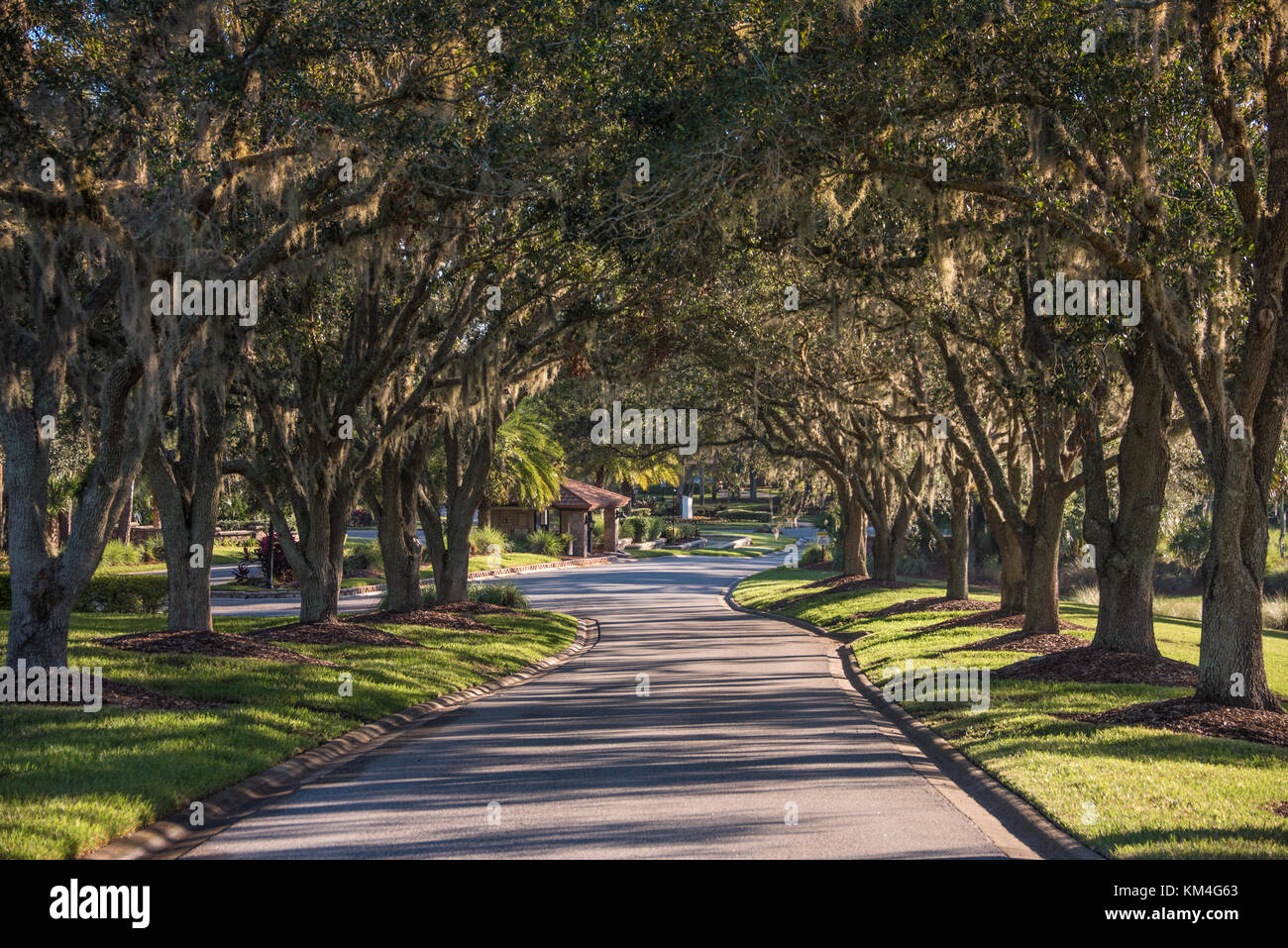 Tree covered lane near the entrance to Sawgrass Pointe at Sawgrass Players Club in Ponte Vedra Beach, Florida. (USA) - Stock Image