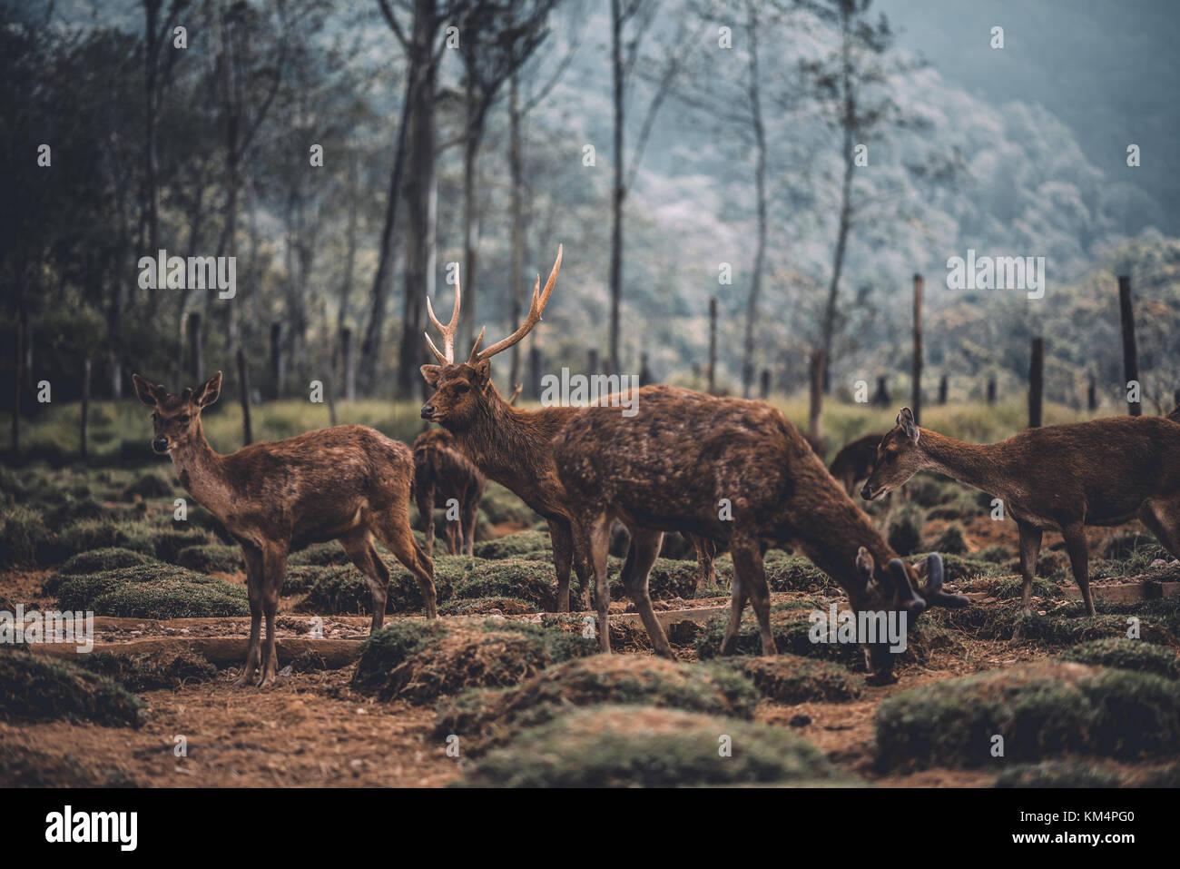 Deer Farm Stock Photos & Deer Farm Stock Images - Alamy Deer Farm House Design Html on