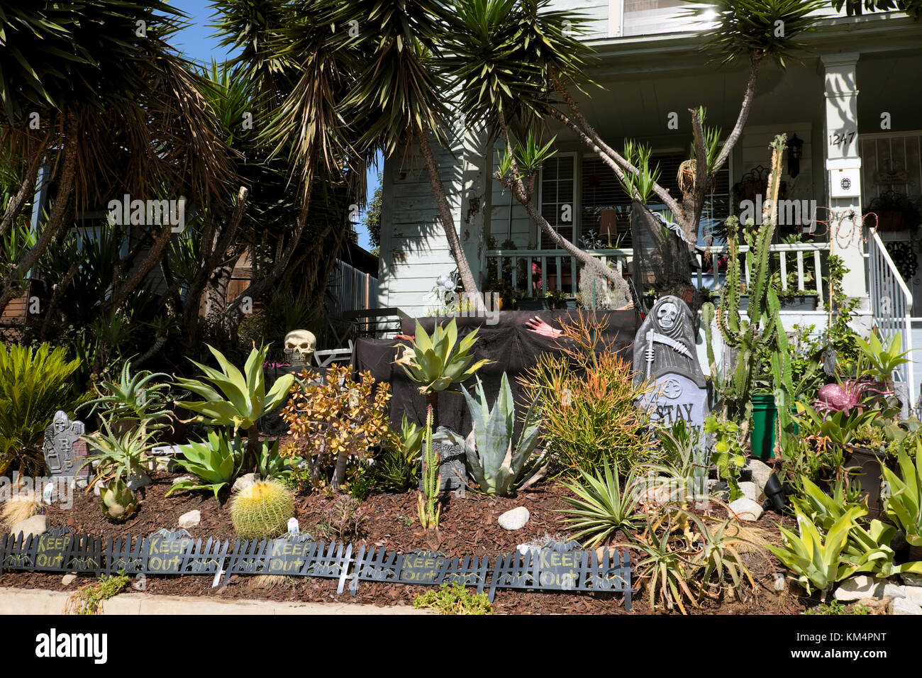 Front yard of a house decorated for Halloween in a garden with cacti and yucca plants in Echo Park, Los Angeles - Stock Image