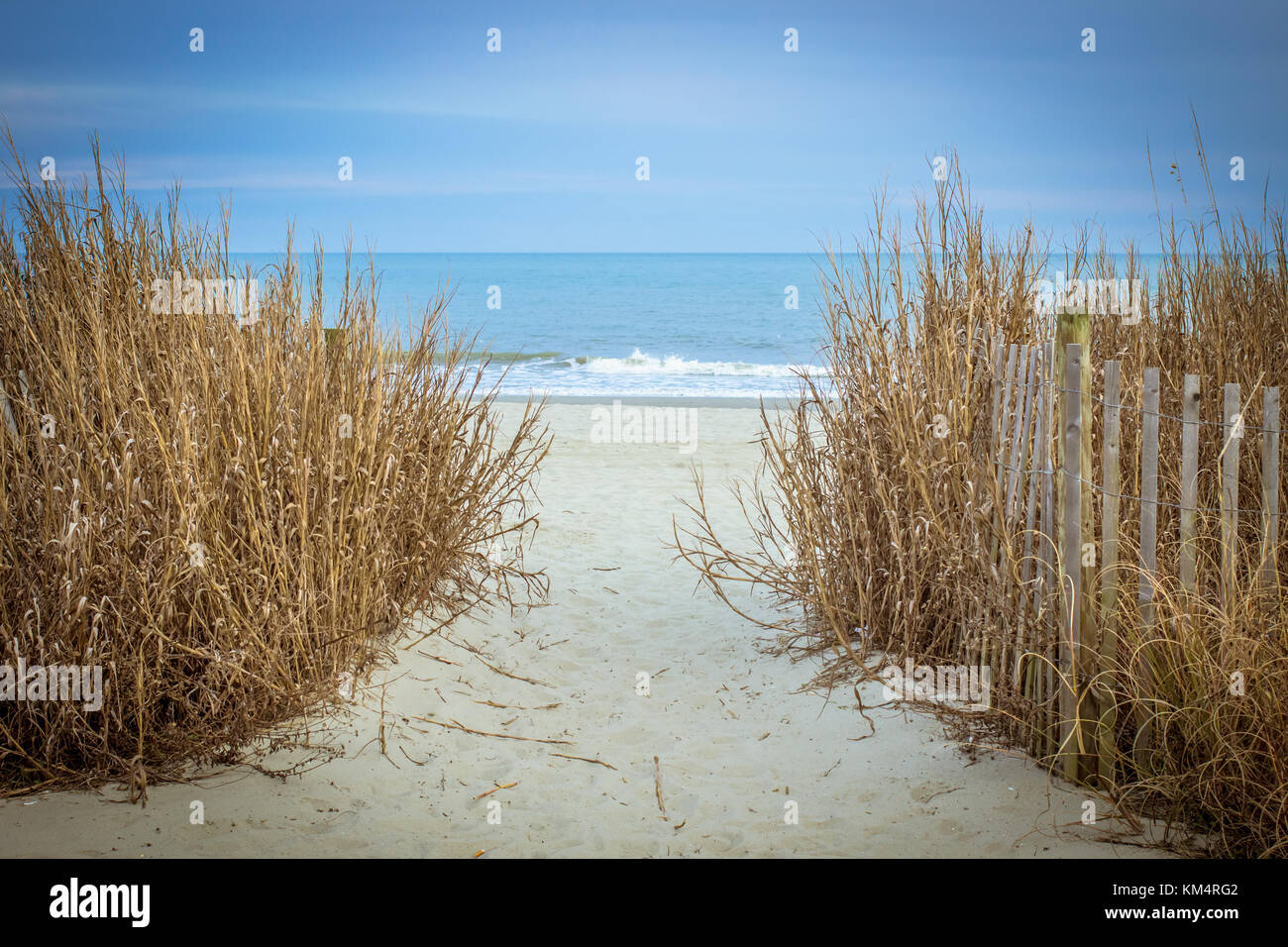 Path To The Beach. Sandy trail through dune grass leads to the wide sandy beaches of the Carolina coast in Myrtle - Stock Image