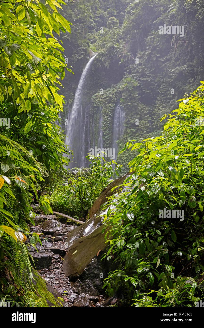Air Terjun Tiu Kelep waterfall near Senaru in the tropical rainforest on the slopes of the Rinjani volcano, Central - Stock Image