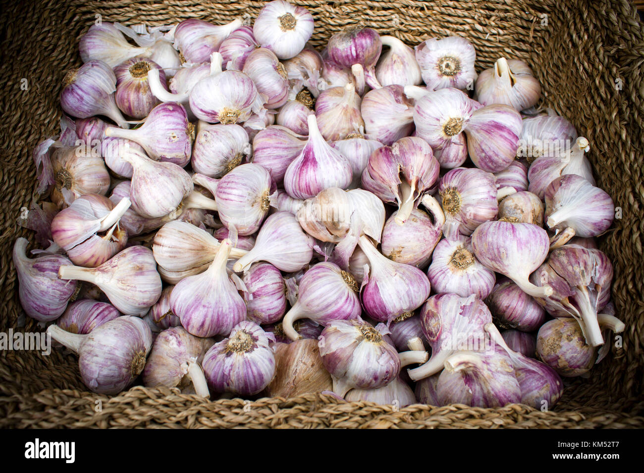 Fresh ripe organic garlic at the weekend farmer's market in Penticton, British Columbia, Canada. The farmer's - Stock Image