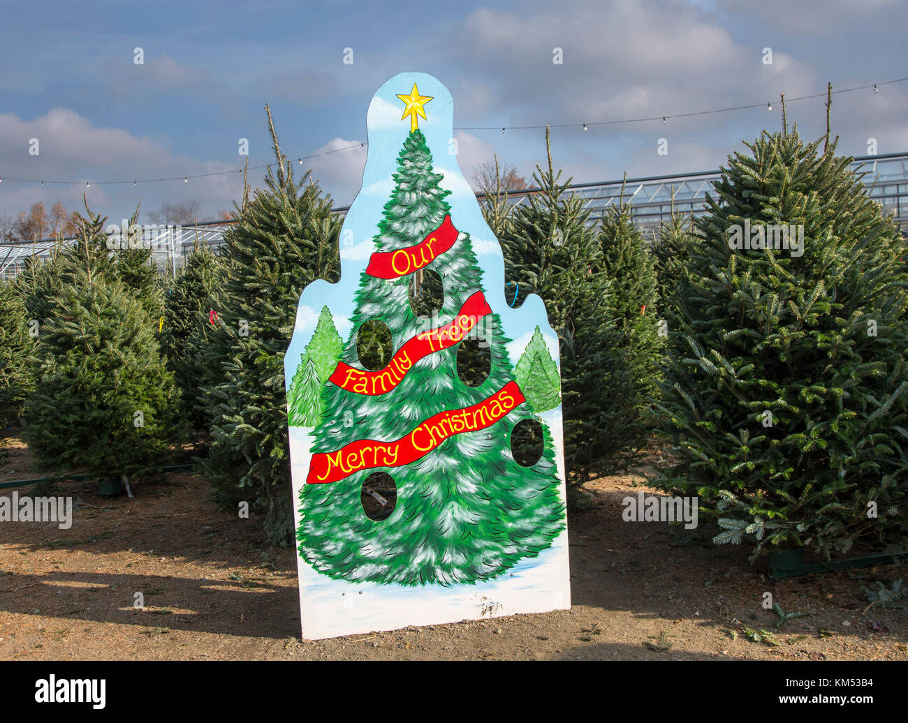 Christmas trees for sale at a nursery in New Jersey - Stock Image