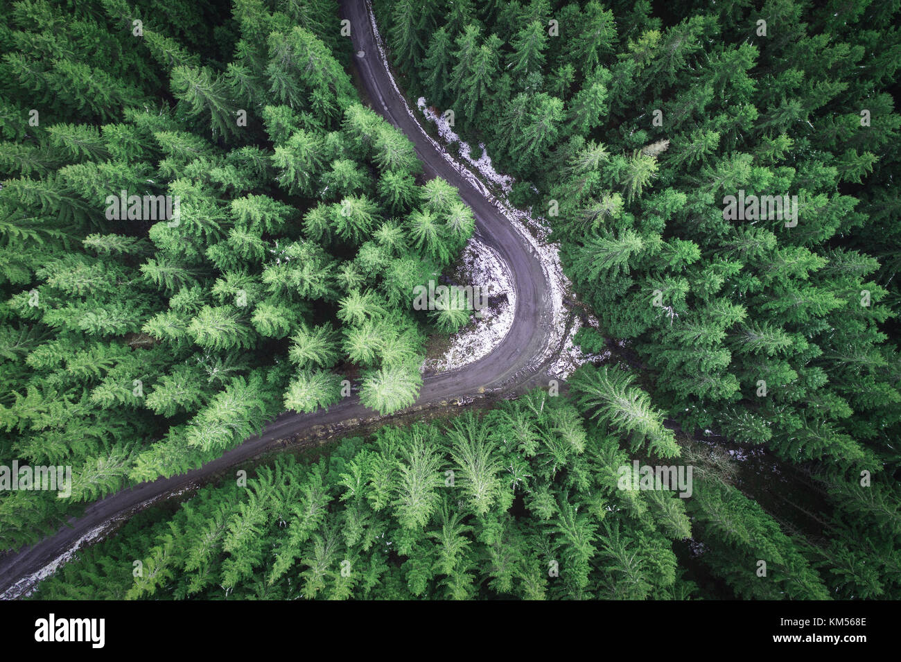 Empty road in a forest from a drone - Stock Image