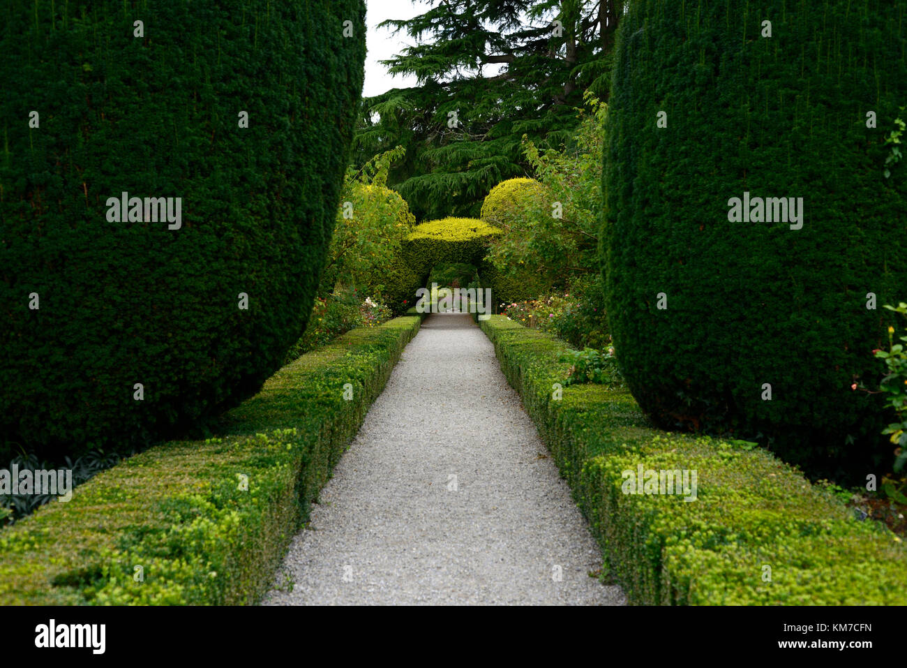 Yew arch, topiary, box hedge, formal gardens, Altamont Gardens, Corona North, carlow, garden, garden trail, carlow - Stock Image