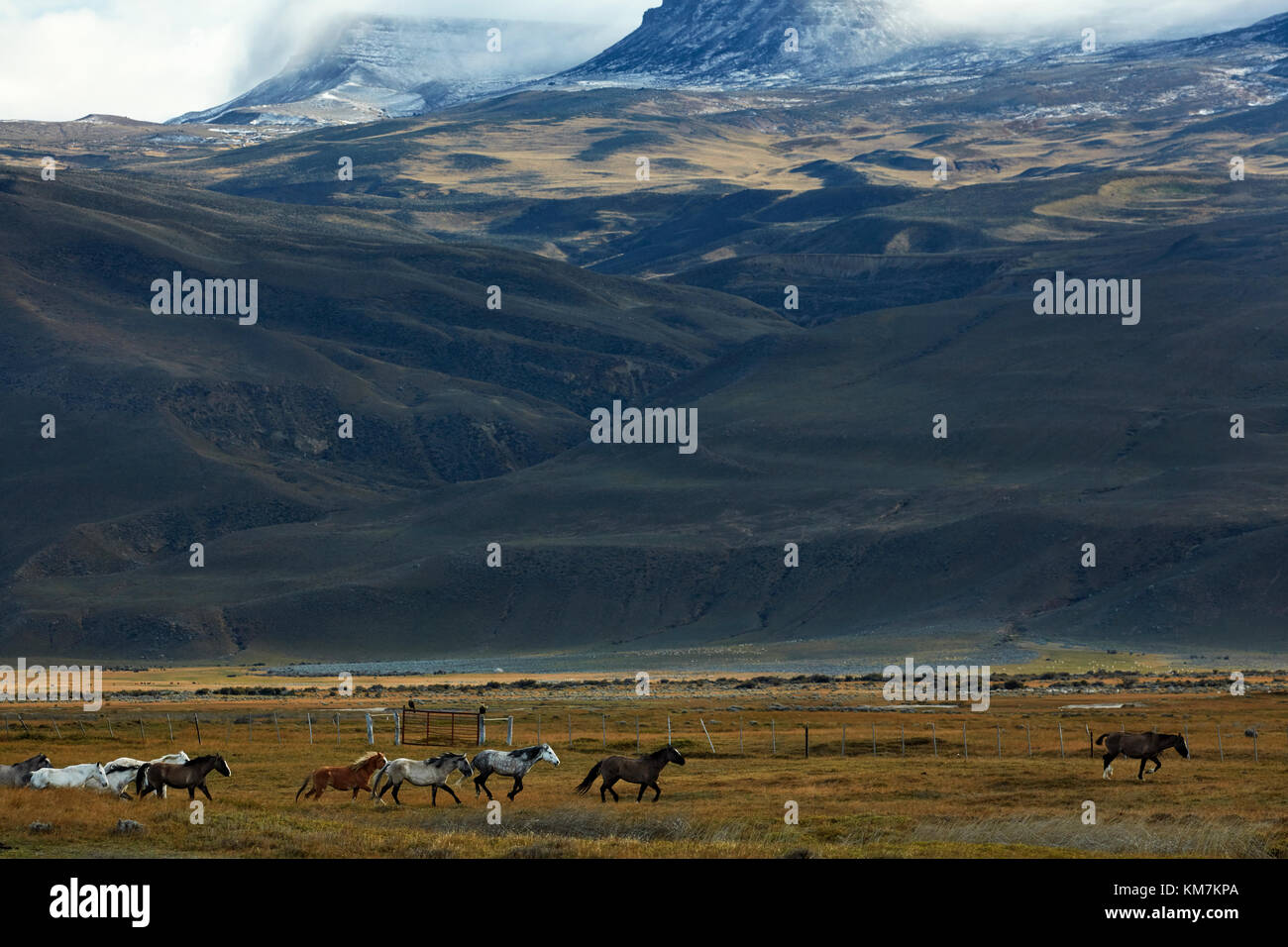 Horses and farmland near El Chalten, Patagonia, Argentina, South America - Stock Image