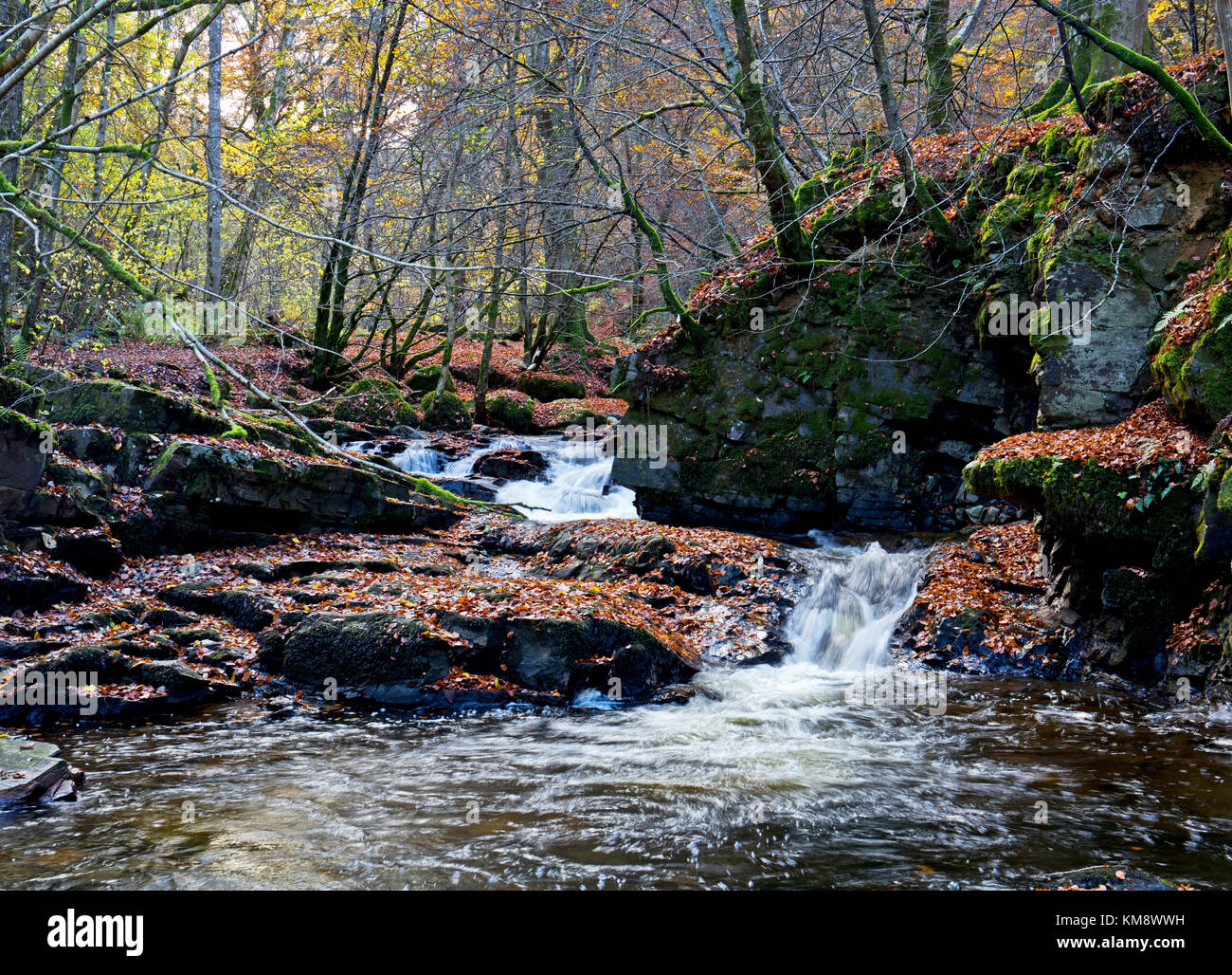 The Birks of Aberfeldy at the peak of the autumn colours - Stock Image