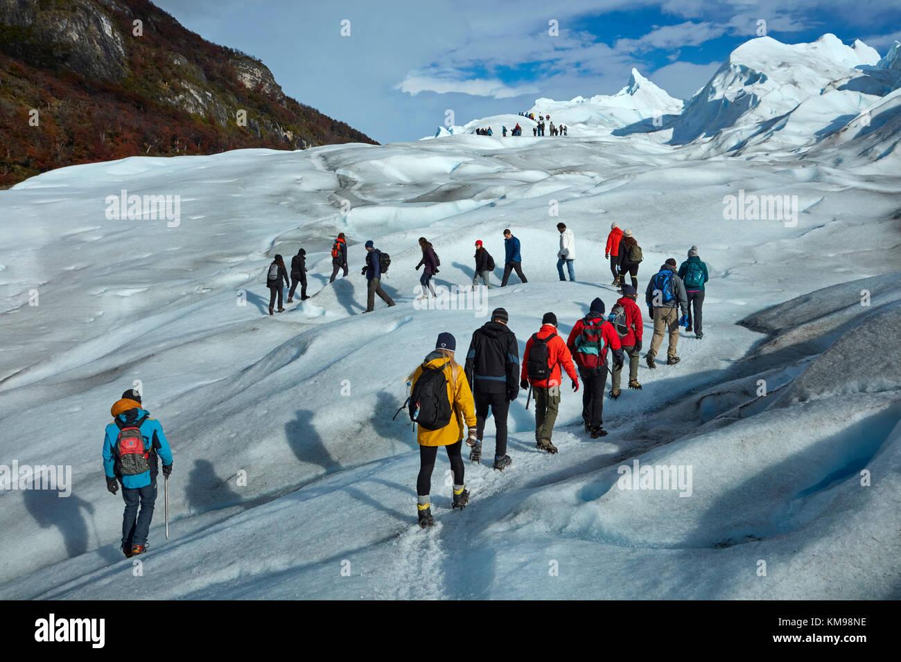 Hikers on Perito Moreno Glacier, Parque Nacional Los Glaciares (World Heritage Area), Patagonia, Argentina, South - Stock Image