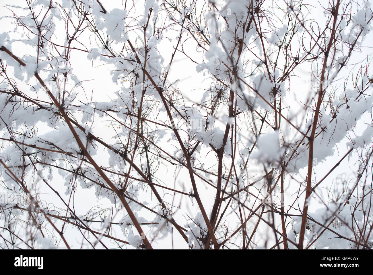 Floral Background Winter Design - Stock Image