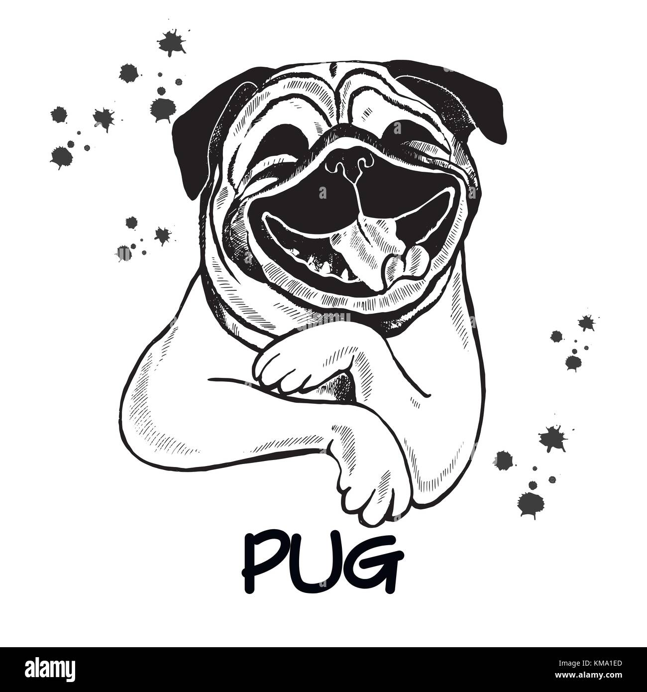 hand drawn sketch style pug vector illustration isolated on white stock vector image art alamy https www alamy com stock image hand drawn sketch style pug vector illustration isolated on white 167407141 html